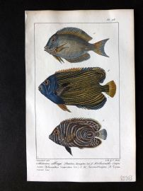 Lacepede & Oudart C1830 Hand Col Fish Print. Chaetodon 98